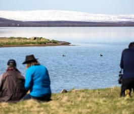 Birding By lake Mývatn